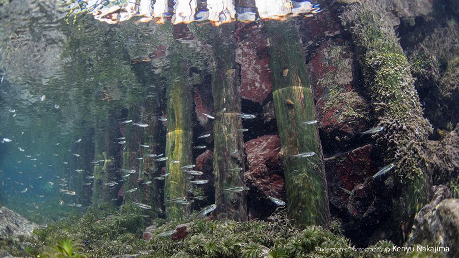 熊本の水辺