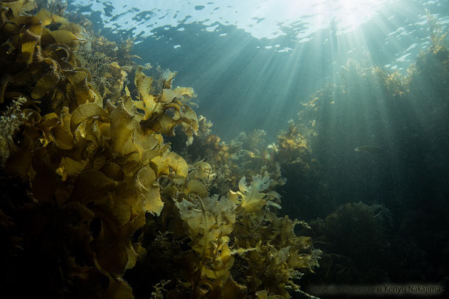田後の海藻畑