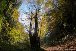 ゴギの渓を沿う林道