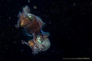 水面下のミミイカ