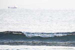 波間のサケ