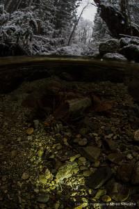 冬のゴギの産卵床