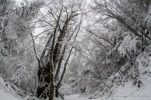 ゴギの渓 雪景色